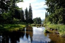 クラマス湖に流れる源泉周囲の景色
