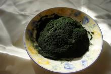 ハーベスト会社から独占直送された当社のアルジー粉体(濃い深緑とキラキラ光っているのが優れたアルジーの証)
